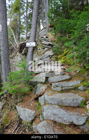 Idlewild along the Saco Lake Trail in Crawford Notch State Park of New Hampshire USA - Stock Photo