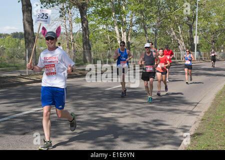 Calgary, Alberta, Canada. 01st June, 2014. Pace bunny pacing runners in the 50th Scotiabank Calgary Marathon on - Stock Photo