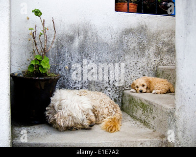 two dogs sleeping on concrete steps - Stock Photo