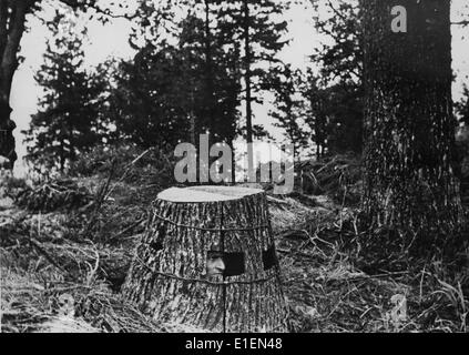 The picture from Nazi propaganda shows a Soviet observations stand made out of a tree trunk in August 1942. Photo: - Stock Photo