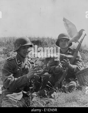 German soldiers release carrier pigeons from a trench in September 1943. The original text from the Nazi report - Stock Photo