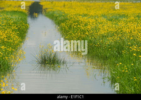 Flooded wildflower field. Kings Sutton, Oxfordshire, England - Stock Photo
