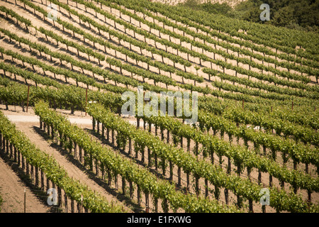Vineyards in Wine Country near Paso Robles in Central California USA - Stock Photo