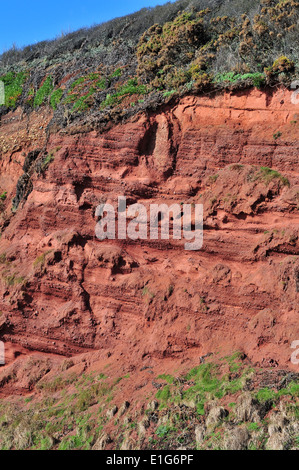 A cliff section of Old Red Sandstone near Langstone Rock, Dawlish, South Devon - showing Devonian stratigraphy. - Stock Photo
