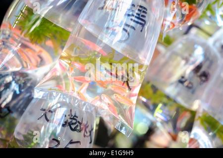 Tropical fish hang in bags on 'goldfish street' in Hong Kong's Mong Kok district - Stock Photo