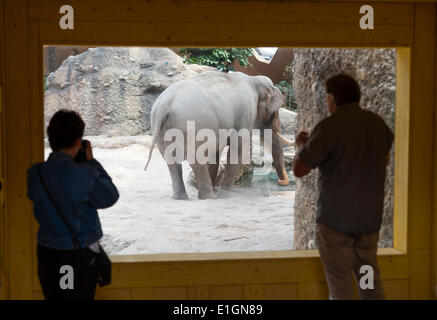 Zurich, Switzerland. 4th June 2014. Get closer! Visitors of Zurich zoo are watching elephant bull 'Maxi' in his - Stock Photo