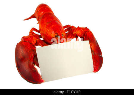 Whole lobster holding a blank recipe or menu card isolated on white - Stock Photo