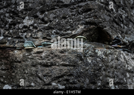 Close up of coins placed in rock, Giants Causeway, Bushmills, County Antrim, Northern Ireland, UK - Stock Photo