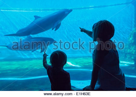 Silhouette of two young sisters watching dolphins in marine aquarium - Stock Photo