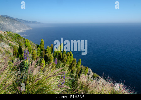 Big Sur California USA - Stock Photo