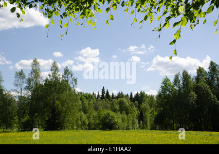 Bright summer pastureland in green and yellow colours at blue sky - Stock Photo
