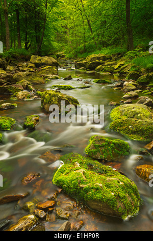 A river through lush forest in the Ardennes, Belgium. - Stock Photo