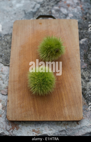 Two chestnuts, Castanea sativa, on chopping board - Stock Photo