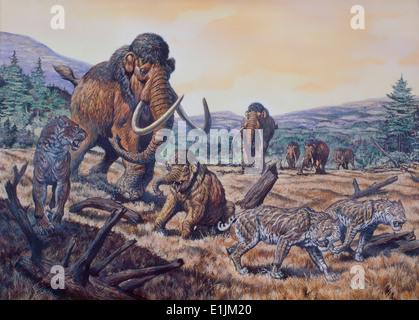 Woolly Mammoth (Mammuthus primigenius) and Scimitar Sabertooth (Homotherium), Pleistocene Epoch (Ice Age) of North - Stock Photo