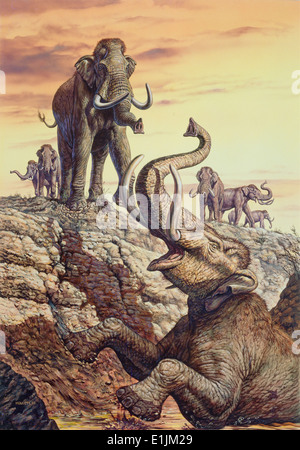 Columbian Mammoth (Mammuthus columbi) trapped in a sinkhole, Pleistocene Epoch (Ice Age) of North America. - Stock Photo