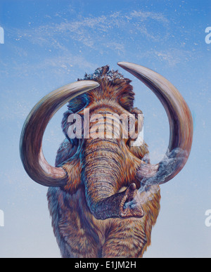 Woolly Mammoth (Mammuthus primigenius) charging, Pleistocene Epoch (Ice Age), North America. - Stock Photo