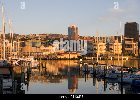 Office buildings on waterfront at dawn, Wellington, North Island, New Zealand, Yachts moored at Chaffers Marina - Stock Photo