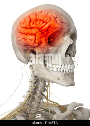 Human brain and nerves of the head computer artwork. - Stock Photo