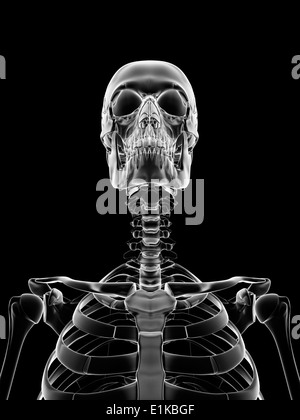Human skull and neck bones, computer artwork Stock Photo: 73690715 ...