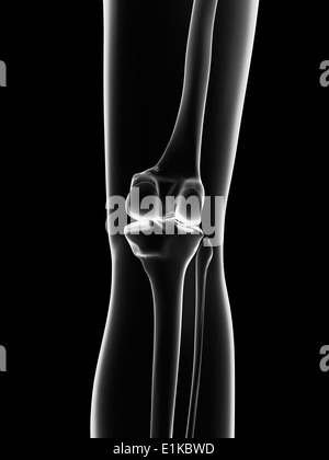Human knee joint computer artwork. - Stock Photo
