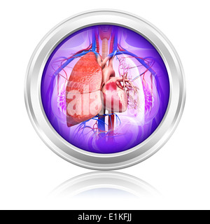 Human lungs and heart computer artwork. - Stock Photo
