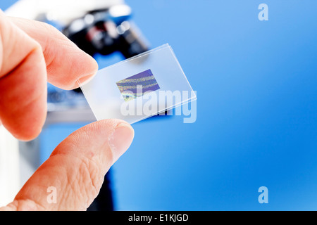 Person holding a microscope slide with a medical sample. - Stock Photo