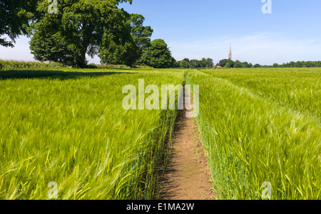 Wheat field on a bring spring morning with St Mary's Church on the horizon in the village of South Dalton, Yorkshire. - Stock Photo