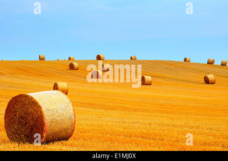 Rural landscape with golden straw bales at a sunny day in october - Stock Photo