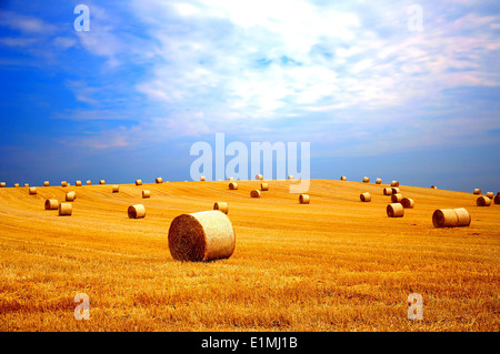 Rural landscape with golden straw bales - Stock Photo