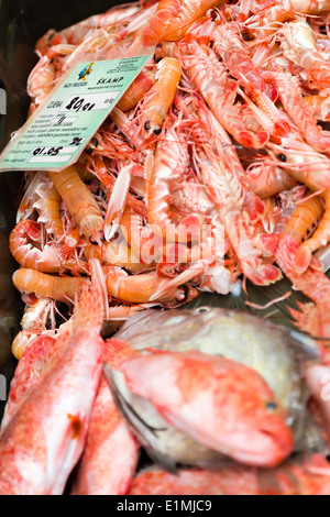 an assortment of fresh scampi and red snapper are displayed for sale at split fish market - Stock Photo