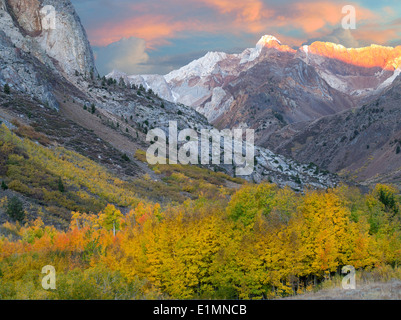 Mcgee Creek drainage with fall colored cottonwood and aspen trees. Eastern Sierra Nevada Mountains, California - Stock Photo