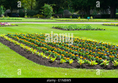 Rows of bedding plants in spring, Suffolk, England, UK - Stock Photo