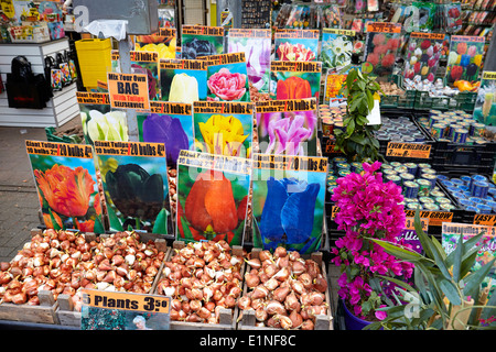 Amsterdam tulips flower market - Holland Netherlands - Stock Photo