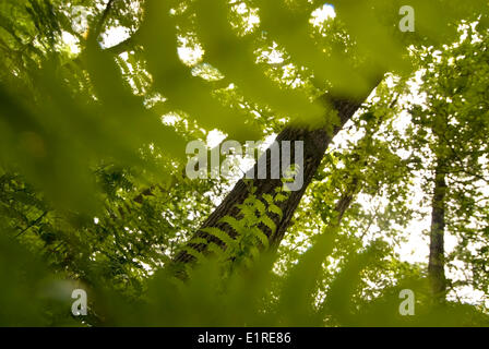 Marsh ferns in a forest - Stock Photo
