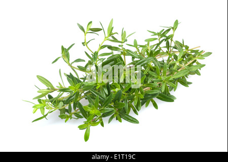 Savory bunch isolated on white background - Stock Photo