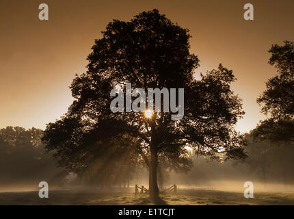 sunlight filters through a thin layer of fog on an autumn morning - Stock Photo