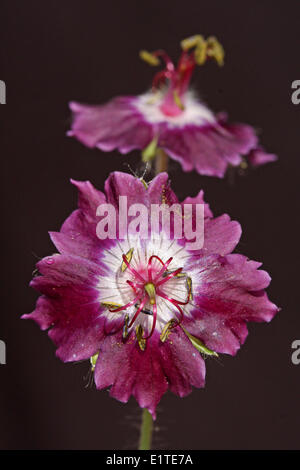 close-up frontal view of flower - Stock Photo