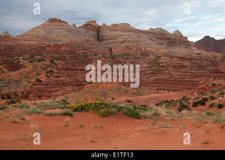 Hiker approaches the Wave in North Coyote Buttes, Paria Canyon-Vermilion Cliffs Wilderness Area, Utah, United States - Stock Photo