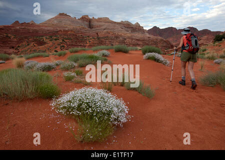 Hiker enroute to the Wave in North Coyote Buttes, Paria Canyon-Vermilion Cliffs Wilderness Area, Utah, United States - Stock Photo