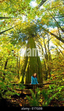 Woman in front of 1000 year old Western Red Cedar Tree, British Colulmbia, Canada. - Stock Photo