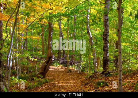 350 year old forest, Lone Shieling, Cape Breton Highlands National Park, Cape Breton, Nova Scotia, Canada - Stock Photo