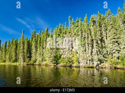 spruce forest along lake, Little Deer Lake, Lac La Ronge Provincial Park,  Northern Saskatchewan, Canada - Stock Photo