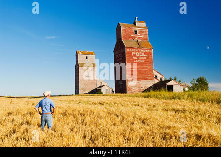 a man looks out over a barley field and grain elevators, abandoned town of Lepine, Saskatchewan, Canada - Stock Photo