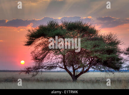 Sunset over the Kalahari, Central Kalahari Game Reserve, Botswana, Africa - Stock Photo