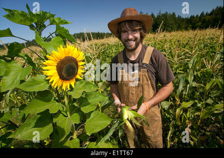 A young farmer checks his corn crop in fields near Yellow Point on Central Vancouver Island, British Columbia, Canada - Stock Photo