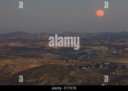 Moon rise after sunset over Olive Groves and the City of Jaen, Province of Jaen, Andalusia (Andalucia), Spain, Europe. - Stock Photo
