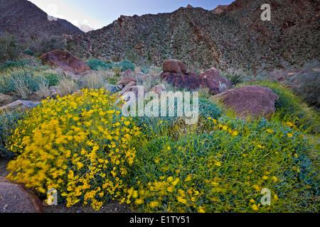 Anza-Borrego Desert State Park, California, USA - Stock Photo