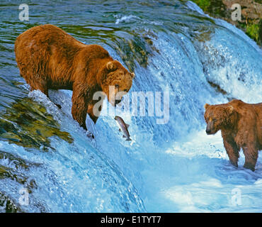Brown bears fishing (Ursus arctos), Katmai National Park, Alaska - Stock Photo