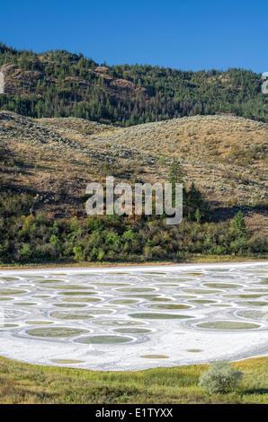 Spotted Lake near Osoyoos, British Columbia, Canada. - Stock Photo