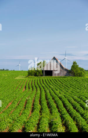 Wooden barn and wind turbines in potatoe field, O' Leary, Prince Edward Island, Canada - Stock Photo